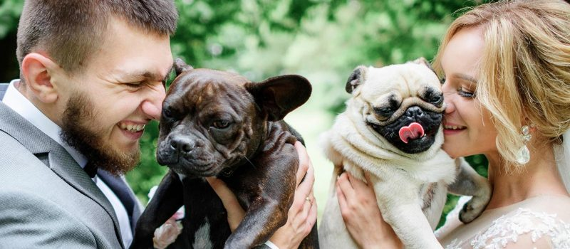 5 Ways to Involve Your pet in Your Wedding